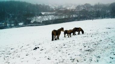 Horses down hill