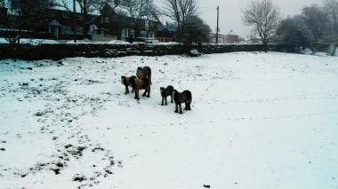 Horses from afar